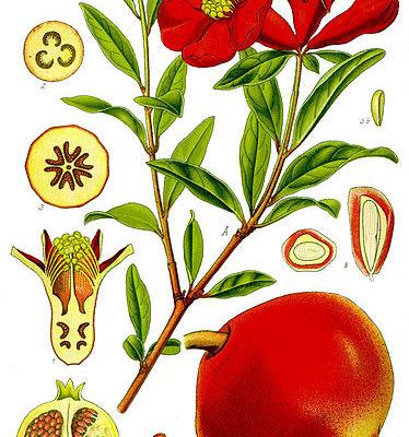 granada ilustracion