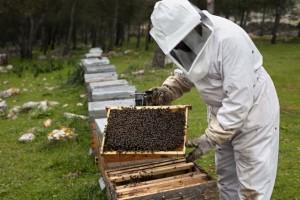apicultor jalea real