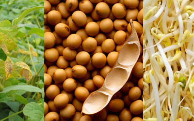 El-cultivo-de-la-soja