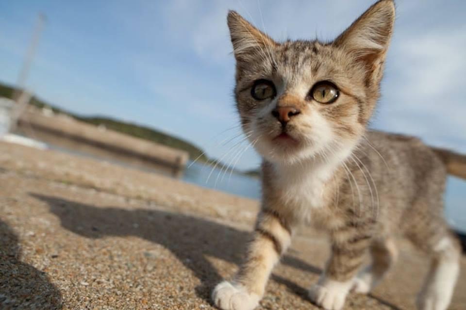 gato 9