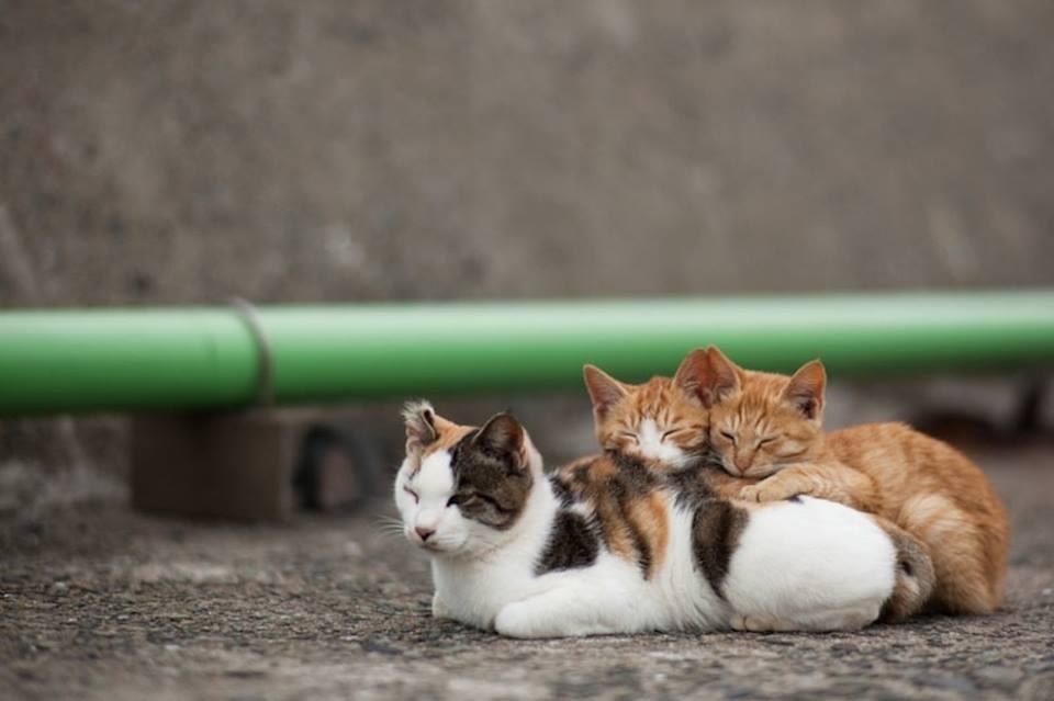 gatos 5