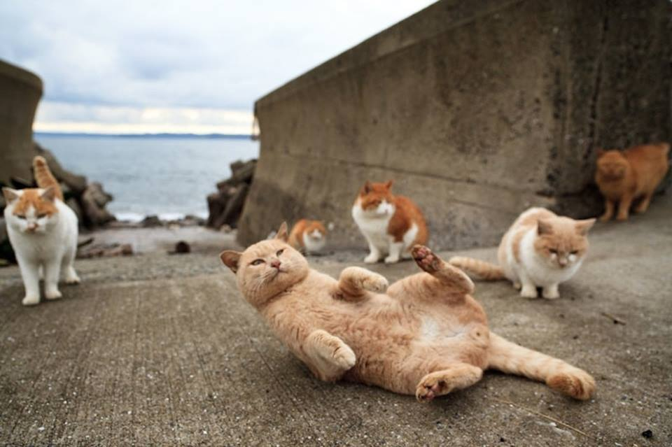 gatos 7