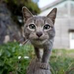 Tashirojima – El cielo de los gatos