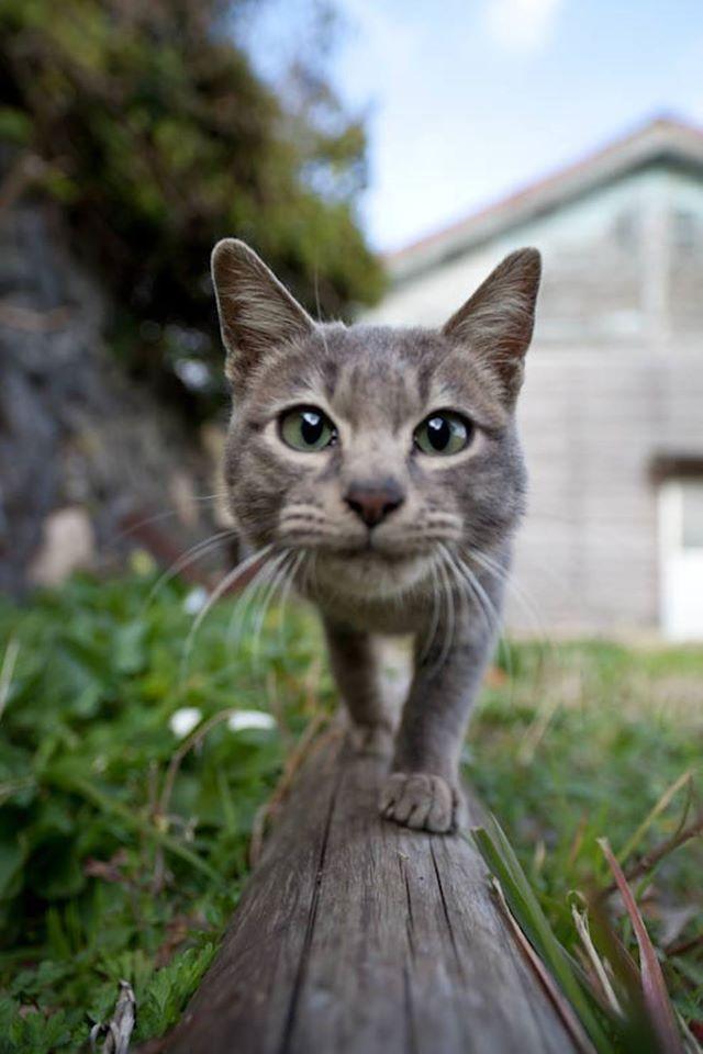 Tashirojima – El cielo de los gatos La isla japonesa donde los gatos mandan.