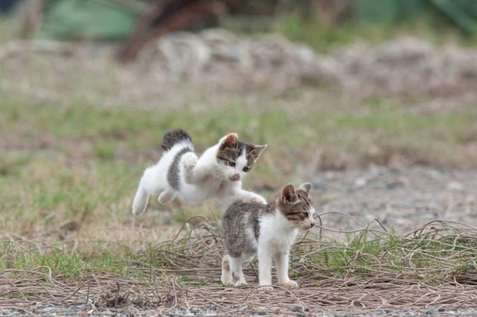 isla de los gatos 2