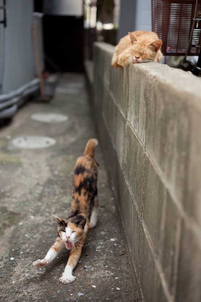 isla de los gatos 4