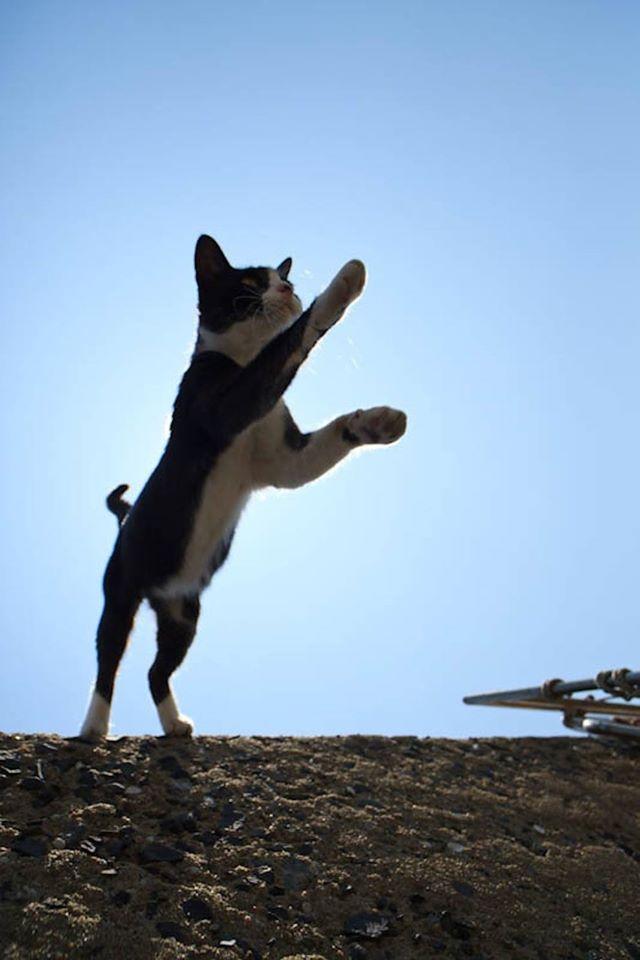 isla de los gatos 7