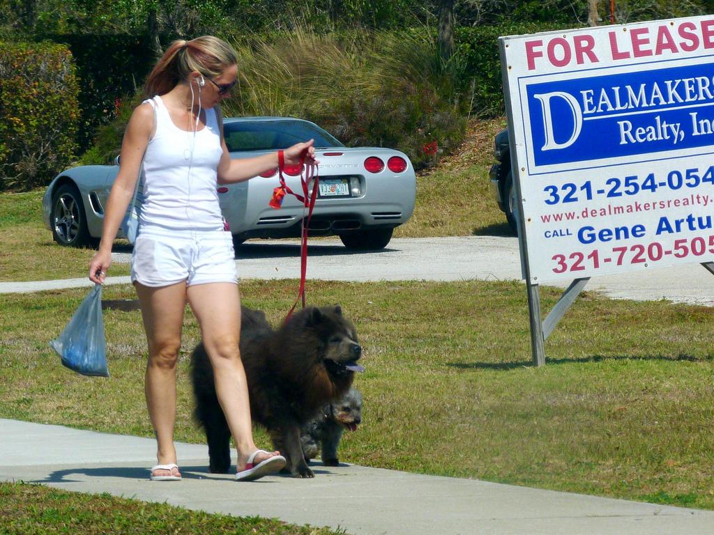 perros chow chow paseando