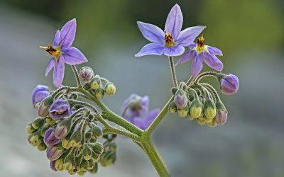 Natre Aprende a utilizar las propiedades de esta planta.