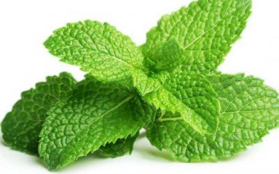 Menta La mejor planta para combatir desórdenes digestivos.
