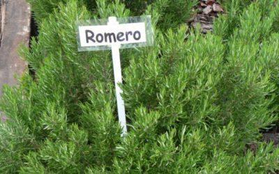 Romero  Aprende como utilizar las bondades del romero
